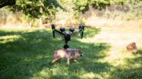 AERIAL_Studio_filmer_les-animaux_gramat_drone_loup