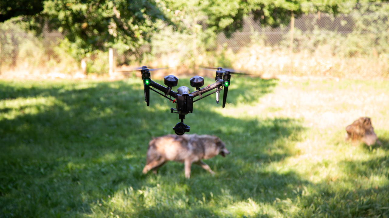 AERIAL_Studio_filmer_les-animaux_gramat_drone_loup